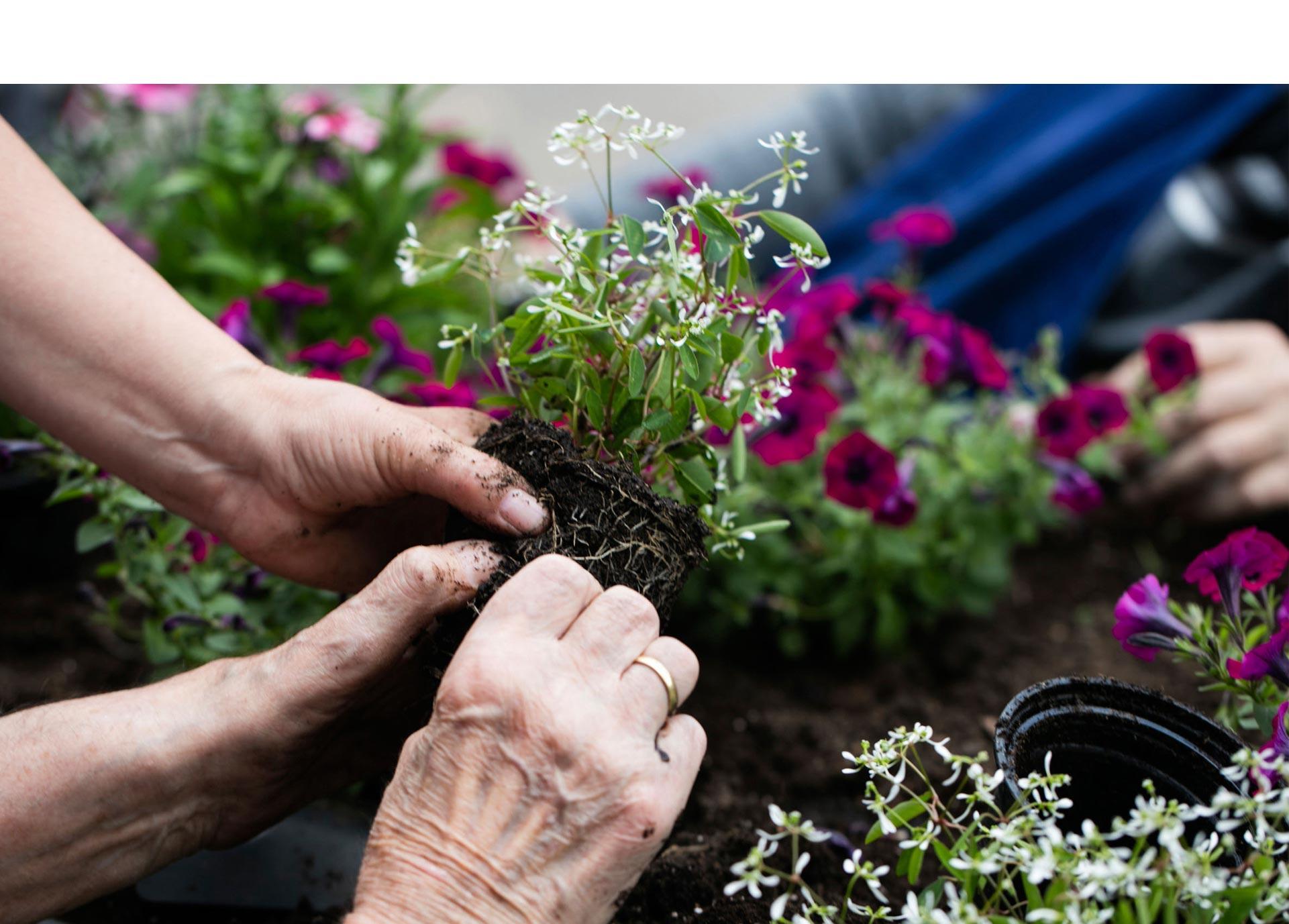 Arbeiten im Therapiegarten von Gartentherapeutin Annegret Huth